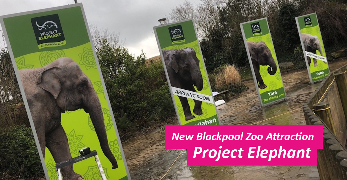 Blackpool-Zoo-Elephants